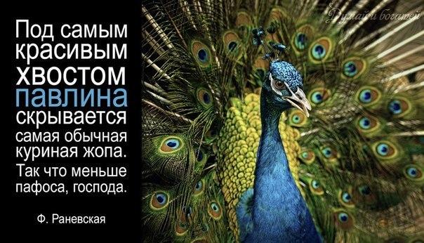 samaya-obichnaya-kurinaya-zhopa
